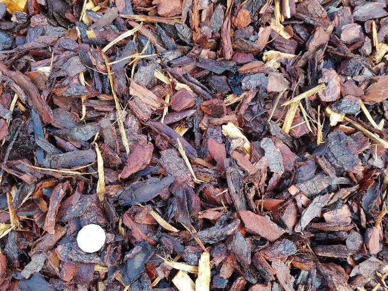 1inch Pine Bark