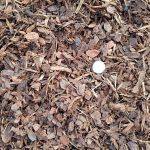 1/2 inch Pine Bark